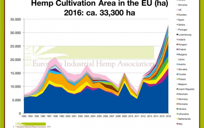 Industrial hemp in Spain: history and news